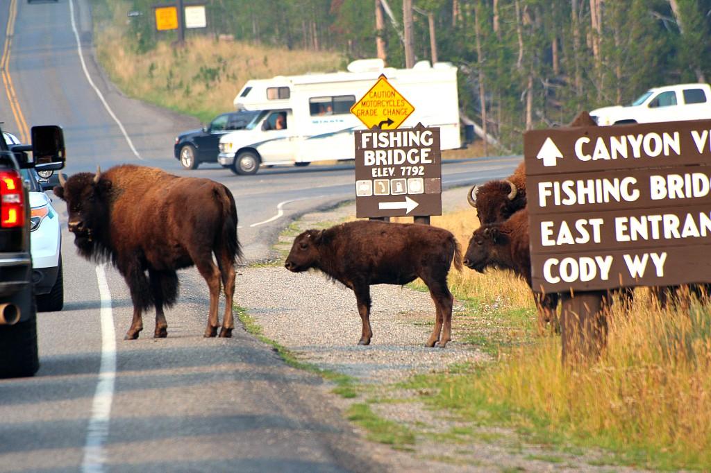 pieno collegamento Campeggio Yellowstone