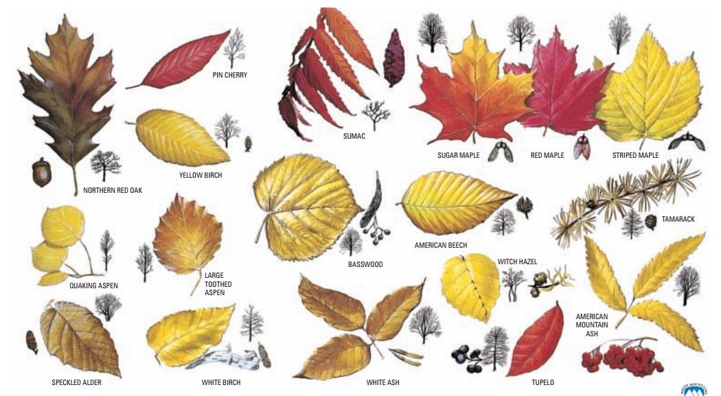 foliage-dettaglio